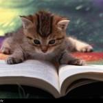 De quelques amoureux des livres…